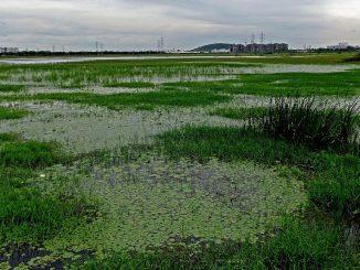 Pallikaranai_Wetland