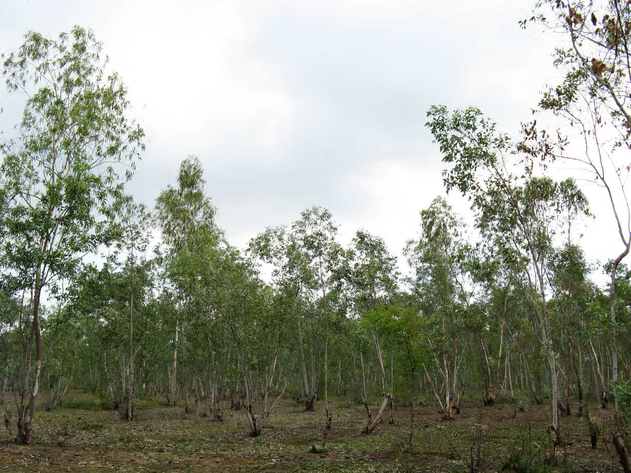 Nanmangalam, a reserve forest right under our noses